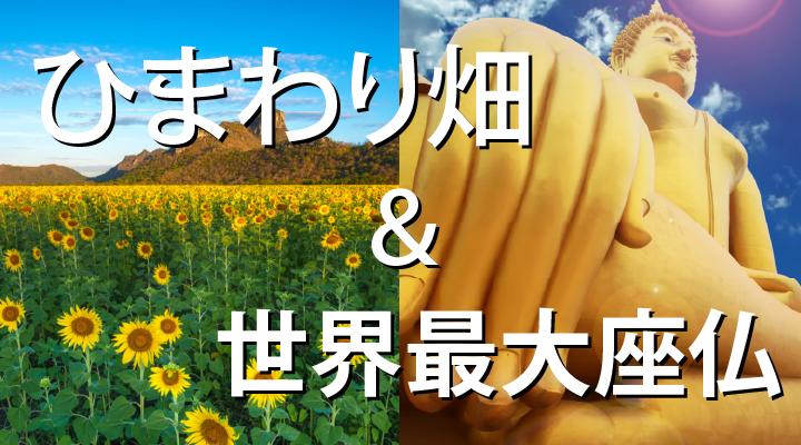ひまわり畑&世界最大座仏